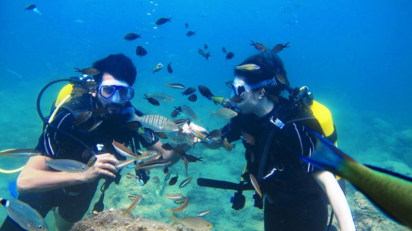 divers and fish underwater