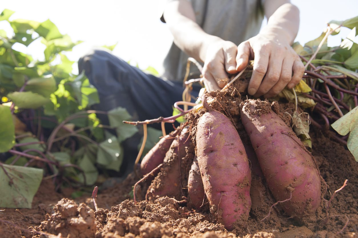 Natural nutrition and ecological agriculture